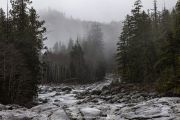 Forest-stream-on-way-to-Tofino