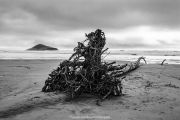Log-on-a-lonely-Tofino-beach